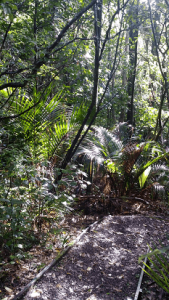 Fitzwilliam Reserve Bush Track