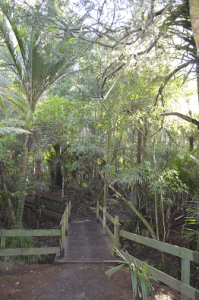 Awaruku Bush Reserve Walkway and Bridge