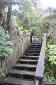 Awaruku Bush Reserve Staircase