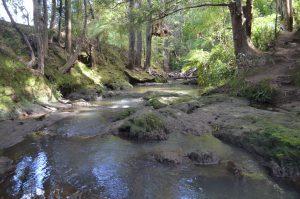 Totara Track Albany Picturesque Stream