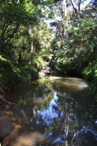 Natiive bush on the Totara Track and Otehe Stream